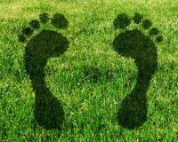 Are You Committed to Reducing Your Carbon Footprint?