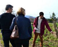 Tour of the Vineyards in the Roman Countryside