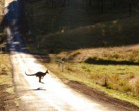 Travel Destinations Around Australia – Kangaroo Island